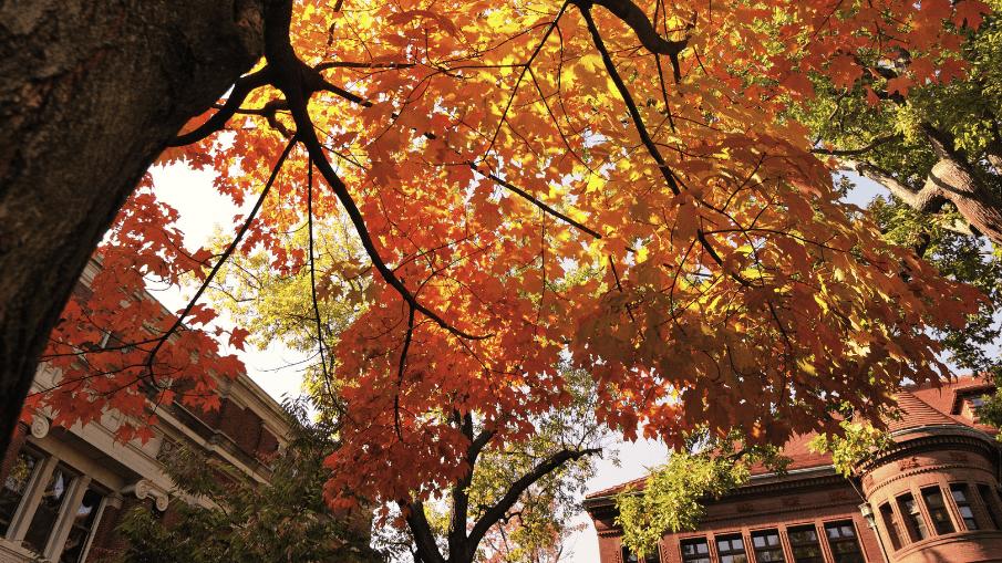 Autumn at Harvard University, Fall Foliage Tree on Campus