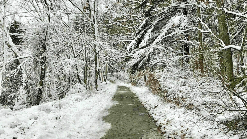 Blue Hills Reservation - Great Winter Hikes Near Boston