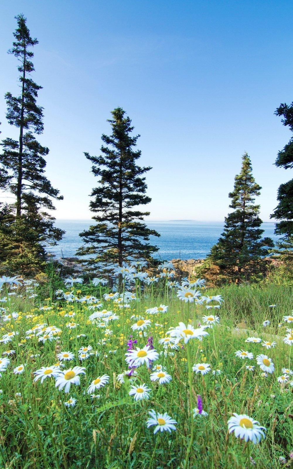Field in Acadia National Park, Springtime
