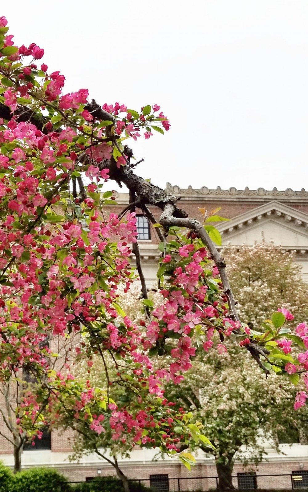spring in boston ma; spring in boston; spring flowers in boston, ma; spring boston things to do