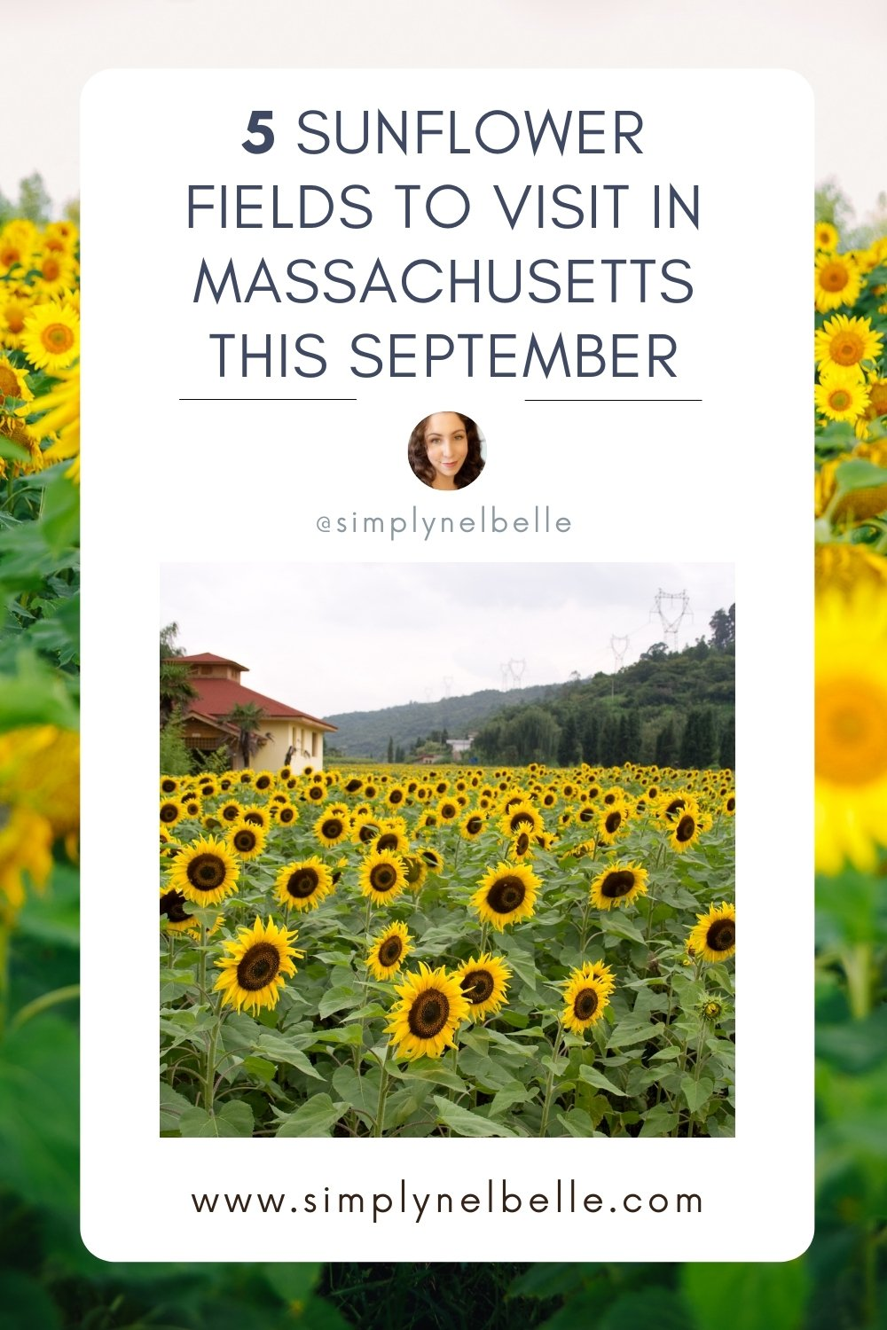 Simply Nel Belle - Pinterest Image - It is time to catch the peak blooms of sunflower fields in MA. Support the farms on this list by visiting their sunflower fields this season. Sunflower fields are a perfect goodbye to summer and a hello to fall.